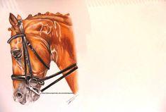 Dressage horse coloured! by TylerWestPortraits
