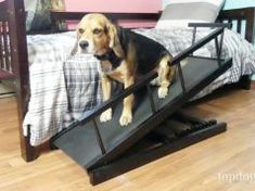 Review: Chasing Tails Adjustable Height Dog Ramp Top Dog Food Brands, Top Dog Foods, Prescription Dog Food, Meds For Dogs, Worms In Dogs, Best Treats For Dogs, Pregnant Dog, Dog Ramp, Dog Died