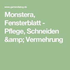 Monstera, Fensterblatt - Pflege, Schneiden & Vermehrung