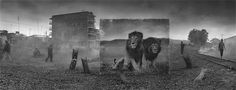 Nick Brandt's life-size images of East Africa's disappearing animals installed in the wastelands that have replaced their habitats Nick Brandt, Amazing Animals, New York Art, Endangered Species, Photojournalism, Nature Photos, Art World, Pet Portraits, Animal Photography