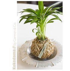 Areca Palm Kokedama by Cannon & Co.