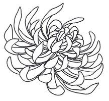 Spider Chrysanthemum by sneakyguy
