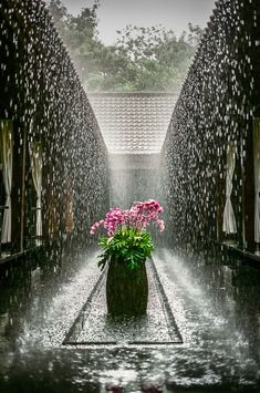 Orchids In The Rain ♥✫✫❤️ *•. ❁.•*❥●♆● ❁ ڿڰۣ❁ La-la-la Bonne vie ♡❃∘✤ ॐ♥⭐▾๑ ♡༺✿ ♡·✳︎·❀‿ ❀♥❃ ~*~ TUE May 24, 2016 ✨вℓυє мσση ✤ॐ ✧⚜✧ ❦♥⭐♢∘❃♦♡❊ ~*~ Have a Nice Day ❊ღ༺ ✿♡♥♫~*~ ♪ ♥❁●♆●✫✫ ஜℓvஜ