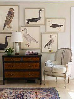 Olof Rudbeck's Birds