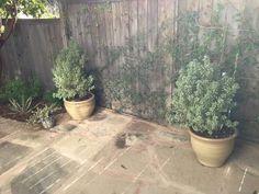 Santa Barbara, Garden, Plants, Decor, Garten, Decoration, Lawn And Garden, Gardens, Plant