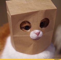 бумажный пакет,кот,anonymous