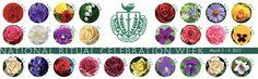 Flowers of the Panhellenic Conference Alpha Omicron Pi, Pi Beta Phi, Kappa Alpha Theta, Alpha Chi Omega, Phi Mu, Greek Week, Go Greek, Greek Life, Sorority Quotes
