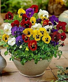Cheap flower seeds, Buy Quality flower seeds for sale directly from China seeds for sale Suppliers: Hot Sale! 100 Pcs/Pack Pansy (Viola cornuta) seeds rare indoor flower seeds in bonsai for home garden plants flowers Happy Flowers, Beautiful Flowers, Exotic Flowers, Purple Flowers, Container Plants, Container Gardening, Fleur Pansy, Garden Plants, House Plants