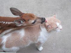 A fawn licks cat http://ift.tt/2s1vxHh