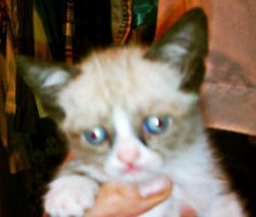 Tard as a kitten!! *awwwwwwwww!!*
