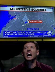 Aggressive squirrel