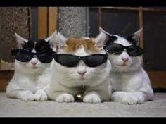 Resultado de imagem para gatos engraçados