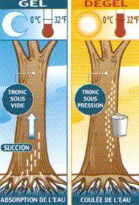 Coulée et production
