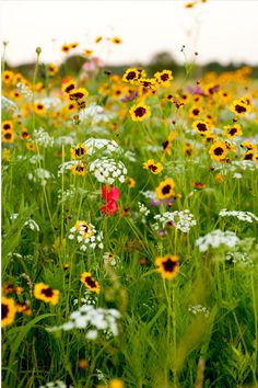 Wild flower garden! Great for cutting and putting into a vase