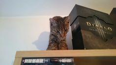 Koteczka na wysokości