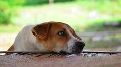 Cachorro triste: saiba quando o pet está chateado com você