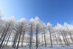 12/13 Winter Season's Photo sketch in the High 1 Ski Resort in Jungsun, South Korea