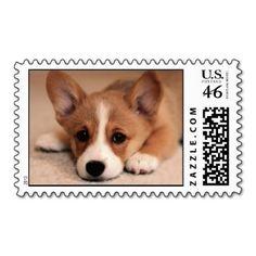 Adorable Corgi Puppy Stamps