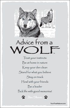 Advice from a wolf: Trust your instincts. Be at home in nature. Keep your den clean. Stand fur what you believe. Stay on track. Howl with your friends. Be a leader. Pack life with good memories! Animal Spirit Guides, My Spirit Animal, Der Steppenwolf, Wolf Stuff, Trust Your Instincts, Wolf Pictures, Wolf Photos, Wolf Love, Animal Totems