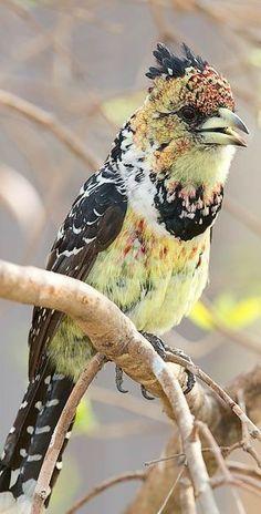 Kinds Of Birds, All Birds, Little Birds, Birds Of Prey, Love Birds, Weird Birds, Pretty Birds, Beautiful Birds, Animals Beautiful
