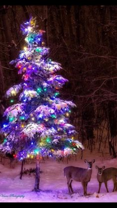 Good morning whit this beautiful Christmas tree ❄⛄ Christmas Scenes, Noel Christmas, Country Christmas, Christmas Pictures, Winter Christmas, Vintage Christmas, Xmas Pics, Christmas Horses, Natural Christmas
