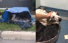 Dog Who Lived In Cardboard Box Feels Love For The First Time