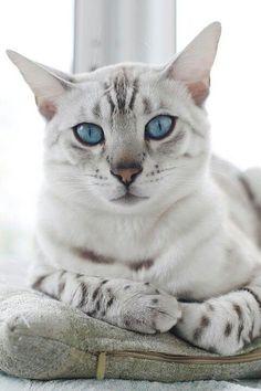 Love Cute Cats (1)