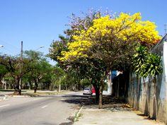 Avenida Cidade Jardim - Bosque dos Eucaliptos