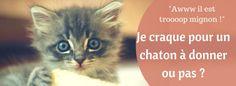 """Actuellement en France, près de 80% des chatons sont adoptés auprès des particuliers. """"Chatons à donner"""" : les petites annonces de ce genre pullulent sur internet. Mais est-ce vraiment une bonne idée d'adopter un chaton donné par un particulier ?"""