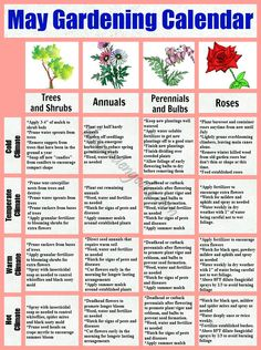 May Garden Calender trees/annuals/perennials/roses For more gardening tips, seed contests, container recipes and plant info visit us on facebook https://www.facebook.com/thegardengeeks