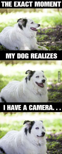 This dog doesn't allow picture taking.