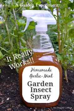 to make and use, homemade garlic-mint garden insect spray was tested on bad. Easy to make and use, homemade garlic-mint garden insect spray was tested on bad. Easy to make and use, homemade garlic-mint garden insect spray was tested on bad. Organic Gardening, Gardening Tips, Container Gardening, Vegetable Gardening, Kitchen Gardening, Gardening Apron, Veggie Gardens, Flower Gardening, Gardening Shoes
