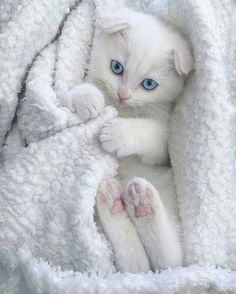 Someone from Alberta is cheating cat lovers by selling them shaved kittens. These shaved kittens were sold in the market as the hairless Sphynx cats. Kittens And Puppies, Cute Cats And Kittens, I Love Cats, Crazy Cats, Kittens Cutest, Ragdoll Kittens, Tabby Cats, Bengal Cats, Sphynx Cat