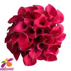 ou will receive Red Passion Mini Callas for your special event. The elegant sleek shape of the Calla, will allow you to design a simple, yet magnificent, high-end contemporary design.  is an enhanced red flower that is simply magical. Tinted to a perfect lipstick red, this bloom would be perfect alongside black and white blooms.  Features:  ✔ 10 Stems Minicallas 20 inches/50cm ✔ Box contains: 8 Bunches 10 stems ✔ Gift Message available