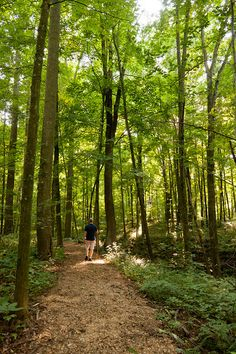 Walking & hiking trails winding through our woods at the Inn at Honey Run, Amish Country boutique hotel. Photo by Jumping Rocks Photography.