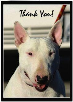 Bull Terrier VS Pitbull Love   Pitbulls   Pinterest   Bull ...