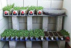 Herbs and romaine lettuce indoors or out...