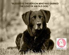#olddoglovers #lifewithdog #loyal