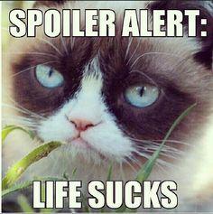 Grumpy Cat - Mean memes...