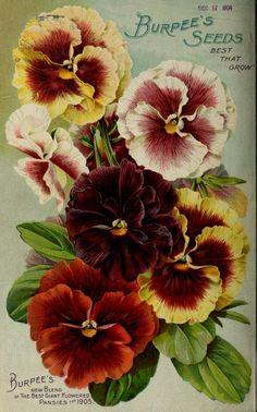 Burpee's farm annual for 1905, back cover