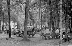Florida Memory - Picnic area at Wakulla Springs 1940's