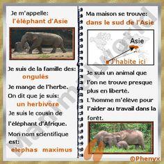 Fiche pour enfant de l'éléphant d'Asie