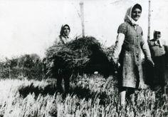 Trasporto dei covoni di riso mietuto effettuato da donne (Guidi Maria e Carletti Maria); lavoro generalmente effettuato da uomini, forse mancanti perché in guerra