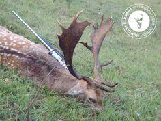 A nice looking Fallow Buck from Jason Palmer.