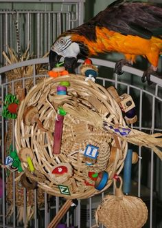Great way to recycle wicker Easter baskets. Bird toys!!