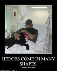 red cross service dog doing his healing work for a vet in the hospital