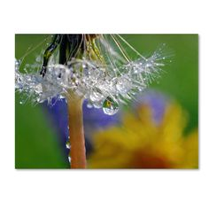 Dandy Drops 2 by Steve Wall Photographic Print Gallery Wrapped on Canvas