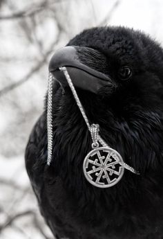 Community about Norse Mythology, Asatrú and Vikings. Blackbird Singing, Crows Ravens, Norse Vikings, Red Moon, Norse Mythology, Animal Totems, My Spirit Animal, Kraken, Bird Feathers