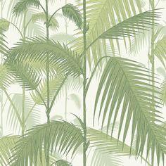 Palm papel de parede lojaquerido❤️vanuska❤️