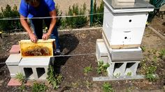 5 ACRE SURVIVAL Homestead/How to Harvest Bee Honey